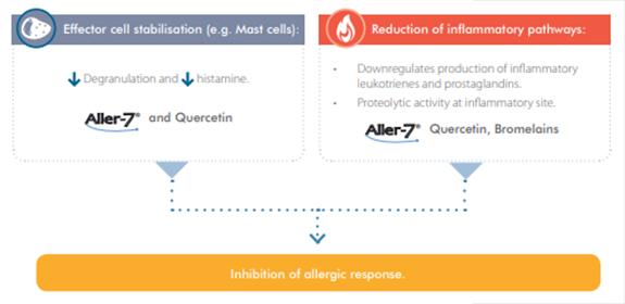Figure 1: Potent Combination to Provide Symptomatic Relief.