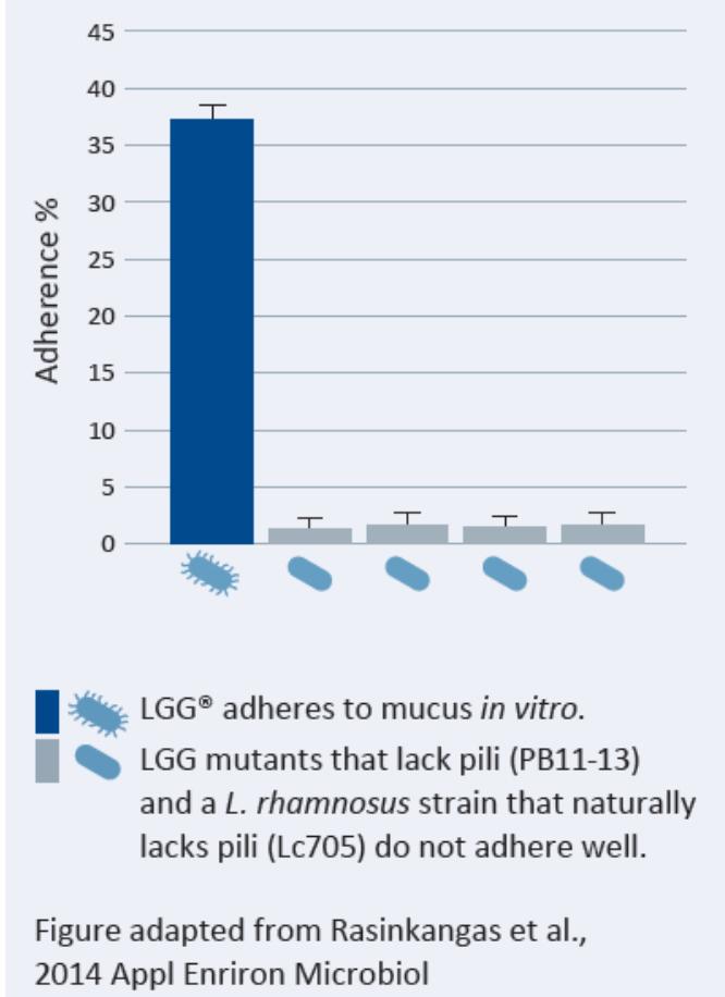 Figure 2: LGG® Mucus Adhesion v GG Mutants.