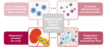 Figure One: Magnesium and the Stress Response.